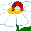 Happy Ladybug On A Daisy — Stock Photo