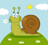 Snail Eating A Flower On A Hill On A Sunny Day — Stock Photo