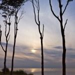 Coastal Forest — Stock Photo #7899666