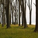 Coastal Forest — Stock Photo #7899668