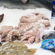 Stock Photo: Octopus