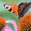 Butterfly — Stock Photo #7325334