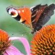 Butterfly — Stock Photo #7325358