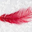Red feather — Stock Photo