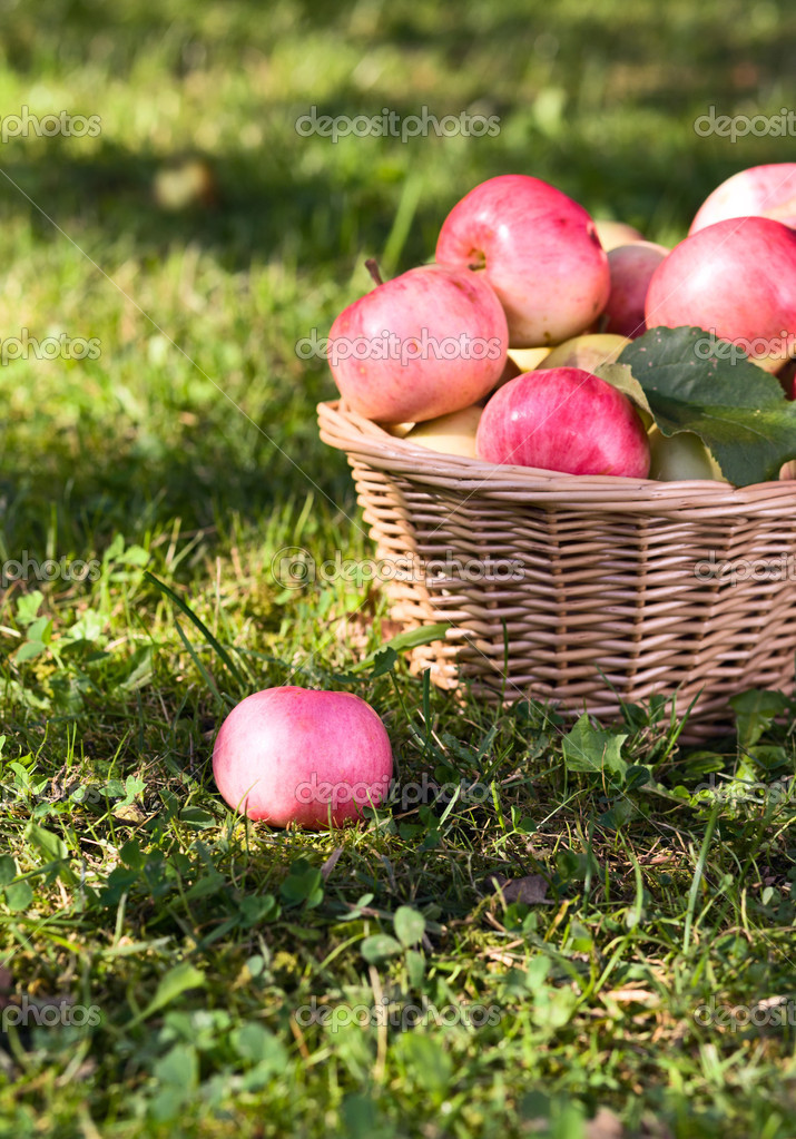 Ripe apples in wicker basket. — Stock Photo #6822441