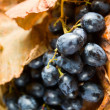 Red grape . — Stock Photo