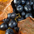 Red grape . — Stock Photo #7215806
