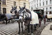 Caballos en Viena. — Foto de Stock