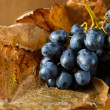 Red grape . — Stock Photo #7436399