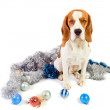Beagle and Christmas ornaments — Stock Photo #7896454