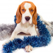 Beagle and Christmas ornaments — Stock Photo