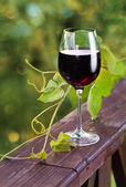 Red wine. — Stock Photo