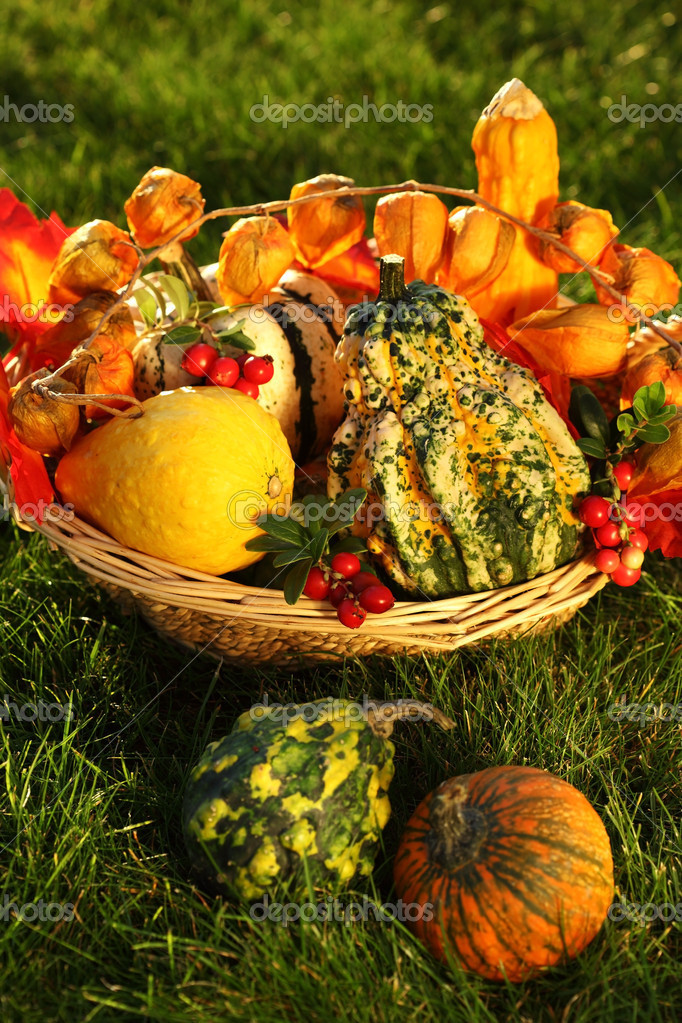 Still life of pumpkins for Thanksgiving  Foto Stock #6925541
