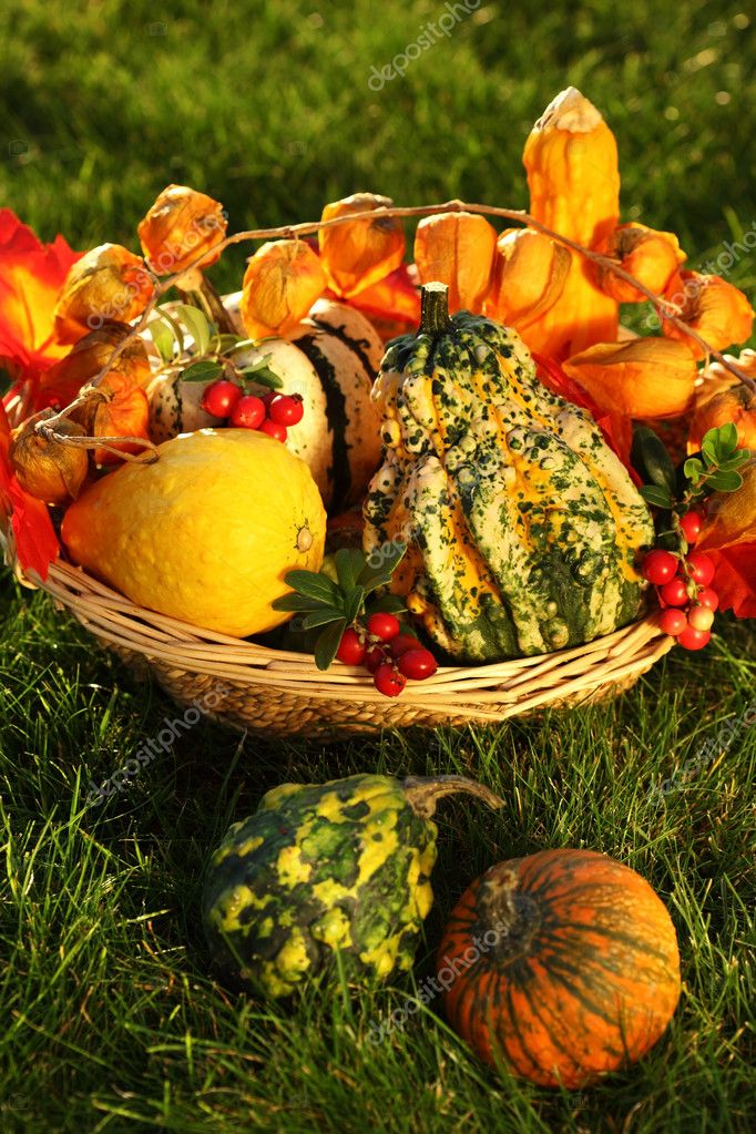 Still life of pumpkins for Thanksgiving  Stock fotografie #6925541