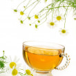 Cup of chamomile tea with fresh chamomilla flowers over white background — Stock Photo