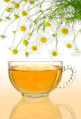 Cup of chamomile tea with fresh chamomilla flowers over colored background — Stock Photo