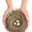 Young woman holding blackbird nest over white background - Stockfoto