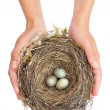 Young woman holding blackbird nest over white background - Stock Photo