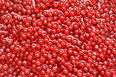 Fresh red currant berries in water - background — Stock Photo