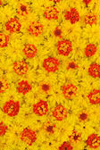 Group of Rudbeckia laciniata and Lantana camara flower heads — 图库照片