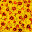 Rudbeckia laciniata, Lantana camara, Tagetes - flower heads — Stock Photo