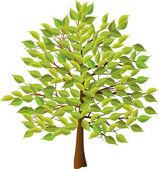 árvore de verão — Vetorial Stock