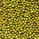Mung beans — Stock Photo #7109413