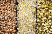 Macrobiotic food — Stock Photo