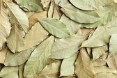 Fond de feuilles de laurier sec — Photo