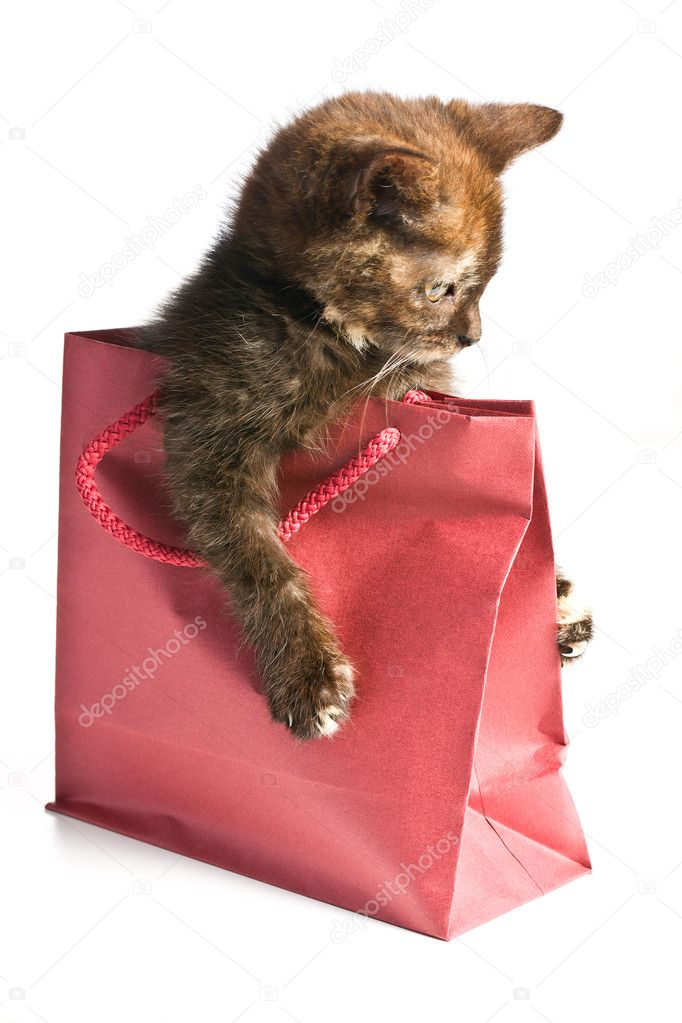 Little kitten in gift bag  Stock Photo #7123955