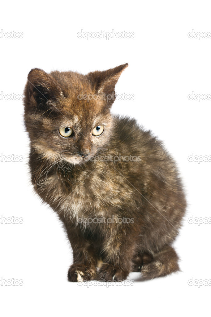 Little kitten isolated on white background — Stock Photo #7123986