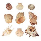 Set of sea shells. Isolated on white — Stock Photo