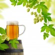 Beer and hops, isolated — Stock Photo
