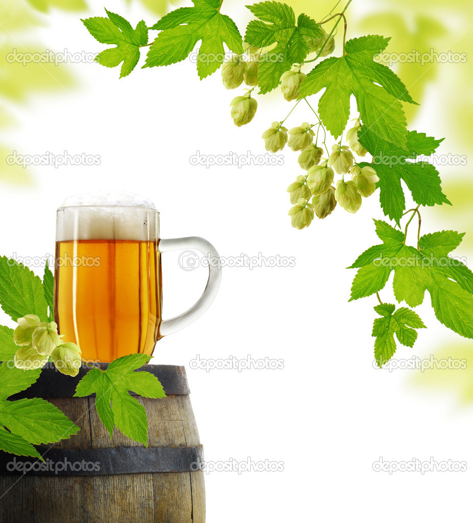 Still life with beer and hop plan, isolated on white background — Stock Photo #7695501