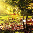 Old bench with autumn leaves and morning sunlight — Stok fotoğraf