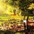 Old bench with autumn leaves and morning sunlight - Stock Photo