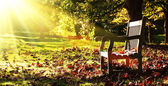 Old bench with autumn leaves and morning sunlight — Stock Photo
