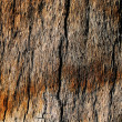 Palm tree bark background — Stockfoto