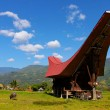 Tana Toraja region, Sulawesi, Indonesia — Stock Photo
