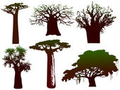 Various trees of Africa - vector — Stock Vector