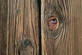 Olho para trás olhando para cerca de madeira — Foto Stock