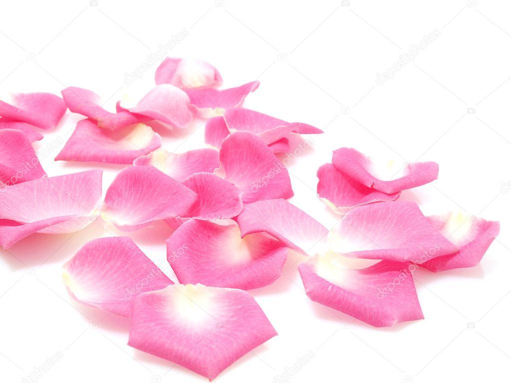 Pink roses petals — Stock Photo © max777 #7382805