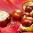Stock Photo: Autumn leaves and chestnuts
