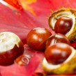 Autumn leaves and chestnuts — Stock Photo