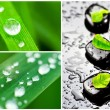 Collage of spa stones and drops od dew — Stock Photo