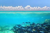 A shoal of blue fishes — Stock Photo