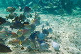 A shoal of fishes — Stock Photo