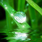 Pearl of dew — Stock Photo