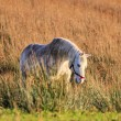 White horse on the meadow — 图库照片