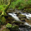 Stock Photo: Killarney National Park creek